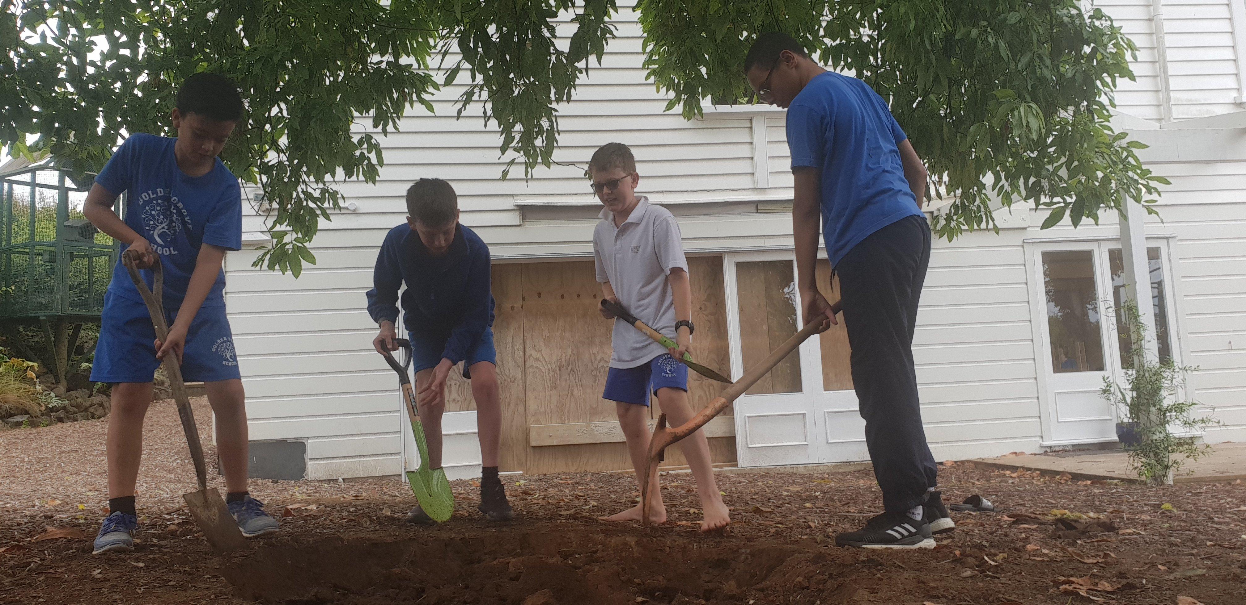 Saving Our Avocado Tree
